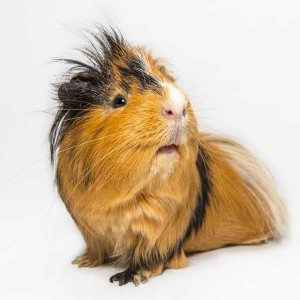 Exotic Pets,exotic pet store,exotic pet store near me,exotic pets for sale,exotic pet vet near me
